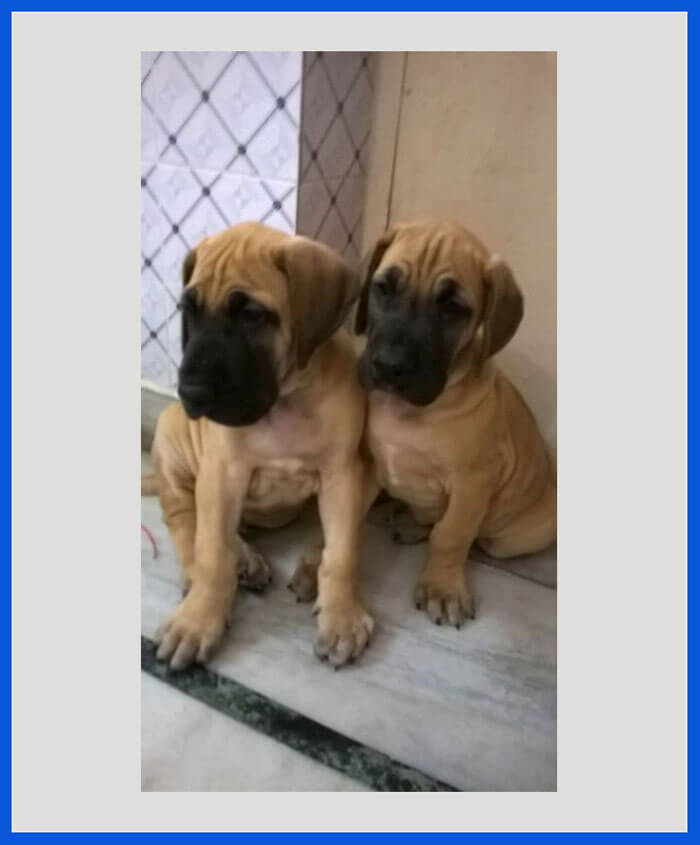 Online Dogs, Birds & Kitten for Sale All Over India - Transportation
