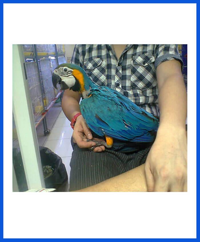 Macaws Birds For Sale - Poddarkennel | Call@9313005254