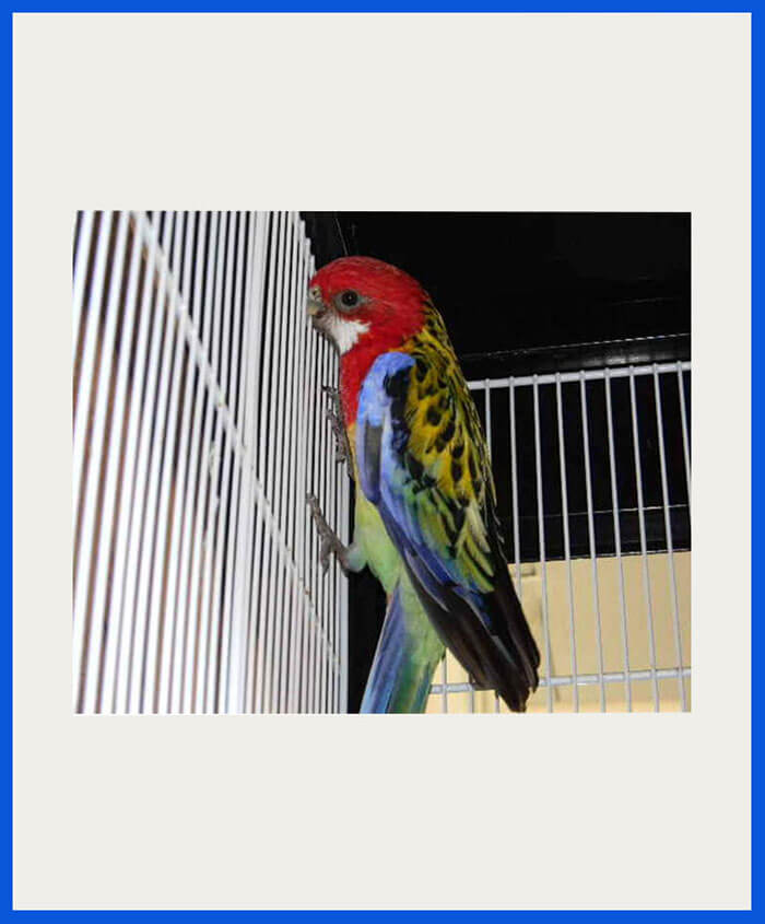 All Types of Birds For Sale All Over India | Transportation